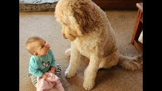 Incredible Moments Dogs Teach Babies  - Dog and baby are best friend to grow up together