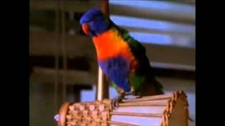 Funny Ace Ventura Pet Detective Scene