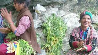 Kasol Malana song while making Malana cream Magical Parvati Valley