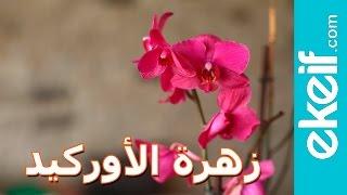 كيف نعتني بزهرة الأوركيد بشكلٍ صحيح؟ Orchid Care