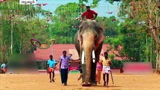 തെക്കേഗോപുരനട തുറന്ന് തെച്ചിക്കോട്ടുകാവ് രാമചന്ദ്രന് എത്തും | Thechikottukavu Ramachandran
