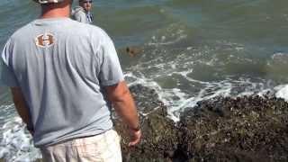 Salt Water Fishing, 6