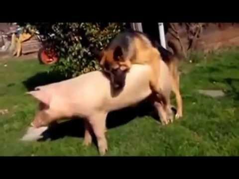 Xxx Mp4 Funny Animal Love So Human Mating Top 10 Animal Mating Funny Complication 3gp Sex