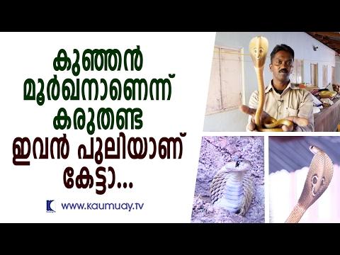 Hostile Little Cobra surprises Vava Suresh | Snake Master | Kaumudy TV