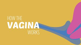 How the Vagina Works