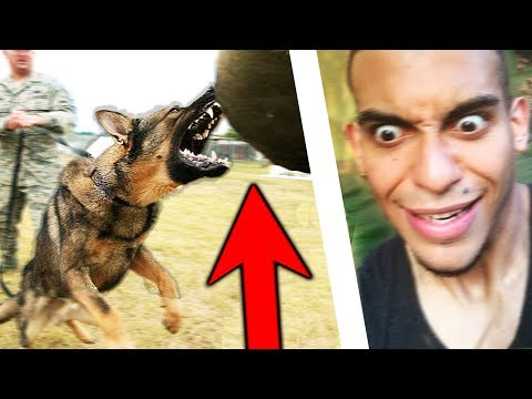 We Learned How To Survive A Dog Attack