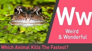Which Animal Kills The Fastest   The Quick and the Curious