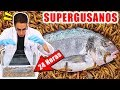 Download Video Download SUPERGUSANOS CARNÍVOROS VS PEZ 24 horas | Experimentos con Mike 3GP MP4 FLV
