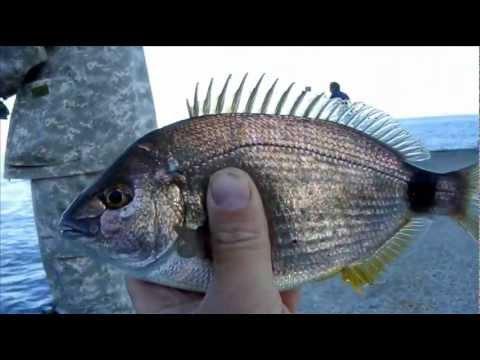 горбыль рыба на что клюет