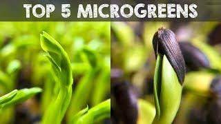 Top 5 Microgreens You Must Grow