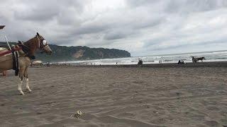 Pantai Parangtritis Jogjakarta