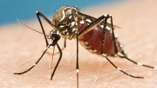 Mosquito... Amazing Video... SubhanAllah