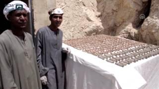 مصر العربية   الكشف عن مقبرة فرعونية جنوبي مصر تضم 1050 تمثالا