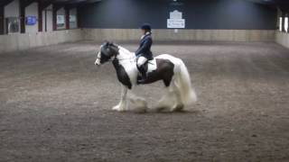 Georgie and Poe - BD Novice 39 - 14 January 2017