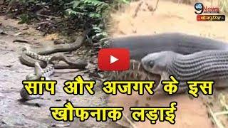 सांप और अजगर के इस खौफनाक लड़ाई को  देखकर दहल जायेगा आपका दिल | Snakes fight Video