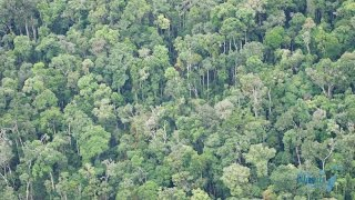 Unreached People Group Rainforest Madagascar Church Planting