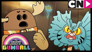 Gumball | And It Made A Coconut Sound! | The Apprentice | Cartoon Network