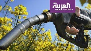 الوقود الحيوي أكثر مصادر الطاقة إثارة للجدل
