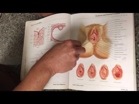 Vaginal Rejuvenation Labiaplasty