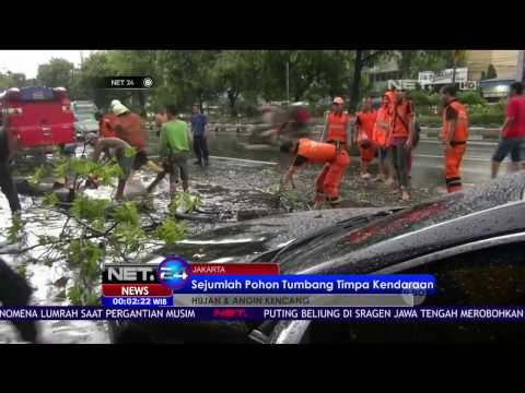 Hujan Deras Disertai Angin Kencang, Sejumlah Pohon Tumbang di Jakarta Pusat - NET24
