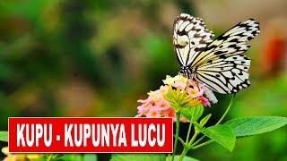 LAGU ANAK INDONESIA - KUPU-KUPU YANG LUCU