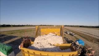 Cotton Harvest 2016 - West Farms