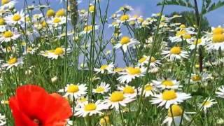 Wie viele Farben schenkt ein Jahr (Cover Song) - Gerd Lappe - Erkner