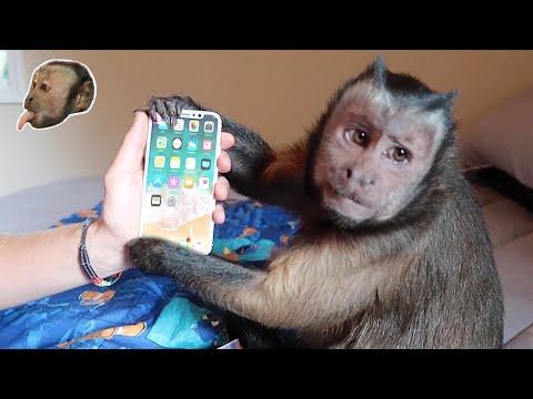 Xxx Mp4 Monkey Unboxing IPhone X 3gp Sex
