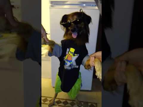 Sex dog