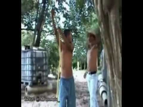 Los Jackass De Anaco