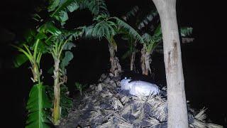 🔴 Kramat Sakral Sesepuh Desa || Wingite Lemah Ndero