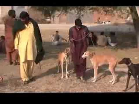 Khargosh Ka Shikar Parhal 2013 2014 Part 1