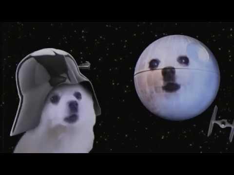 Funny Vine  Dog Sings Star Wars Song