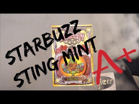 Xxx Mp4 Starbuzz Serpent STING MINT Review 3gp Sex