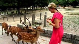 Deer attack in Nara Park
