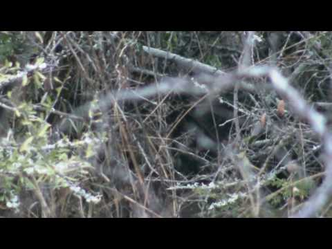 Xxx Mp4 GSC 0705 Lion Cubs Shawn Silmiya Hendricks 3gp Sex
