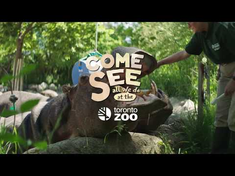 Xxx Mp4 Ode To Toronto Zoo Keepers River Hippo 3gp Sex