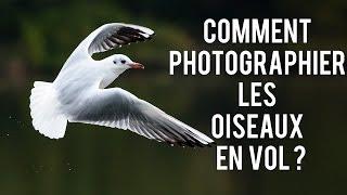 Comment photographier les oiseaux en vol (ou pas) : matériel, réglages, conseils PHOTO