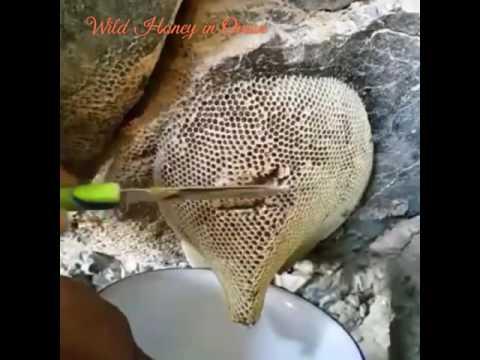 (Wild Honey in Oman)(العسل البري في سلطنة عمان)