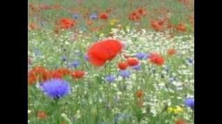 Aisa Bhi Dekho Waqt [Full Song] (HD) With Lyrics - Saathi