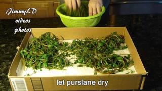 怎样制作干马齿苋, how to dry purslane for winter use