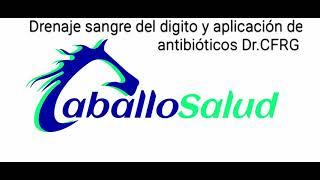 Aplicación de antibióticos vía vena digital.  @Caballosalud Dr. Carlos Federico Rodríguez Garantón.