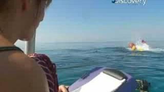 MythBusters - Shark
