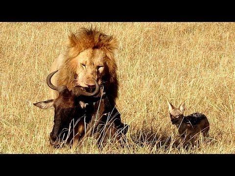 Kenya Masai Mara Part 2