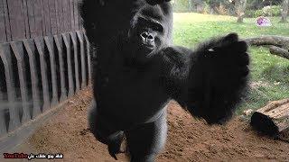 10 حيوانات استخدمت طرق عبقرية للهروب من حديقة الحيوان !