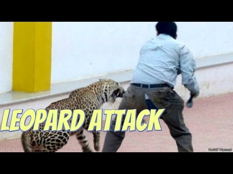 Indian leopard injures six in Bangalore school