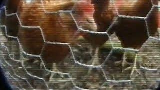 Big Brother | Pilot Season Trailer | 2000