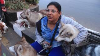 Lady with 6 Siberian Husky in Surat I Pet Walk by Animal friend