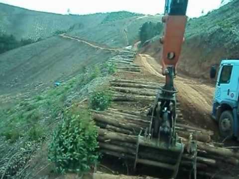 operador WISTER no carregamento de madeira da expresso nepomuceno