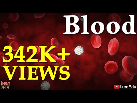 Blood Learn About Blood Composition And Its Functions